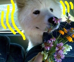 dog and aesthetic image