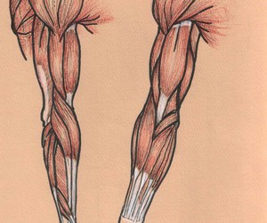 anatomy, muscles, and طبيب image