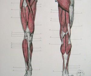 anatomy, art, and homework image