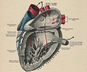 heart, anatomy, and doctor image