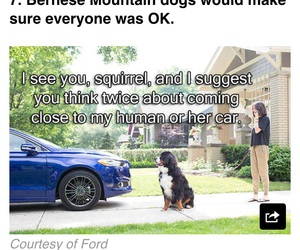 car, funny, and dog image