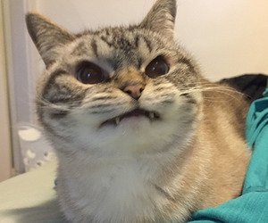 cat and angry image