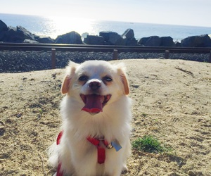 beach, run, and smile image