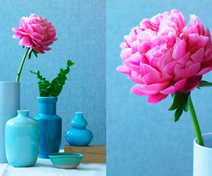 blue, rose, and pink image
