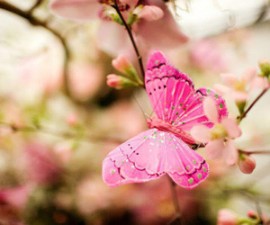butterfly, nature, and pink image