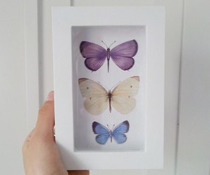 blue, butterfly, and frame image