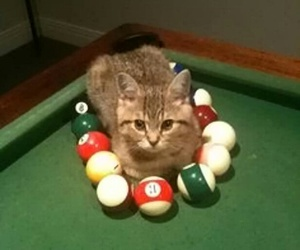 balls, cat, and billiard image