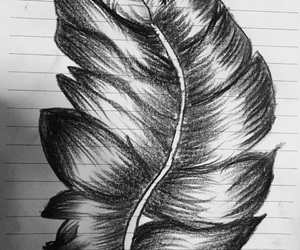 art, blackandwhite, and feather image