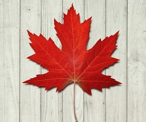 red, canada, and wallpaper image