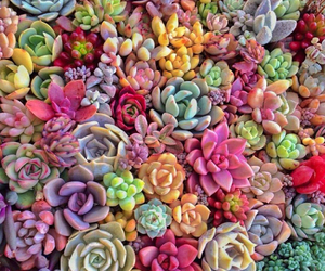 plants, flowers, and pretty image