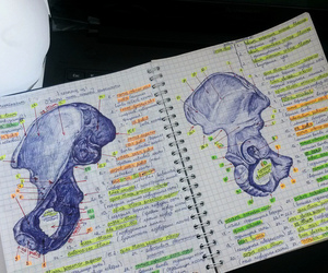 anatomy, medicine, and medical student image