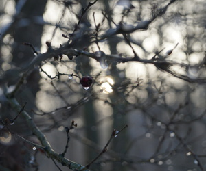 berrie, nature, and photography image