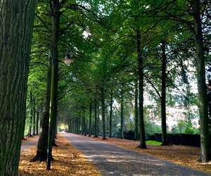 autumn, beautiful, and Herbst image