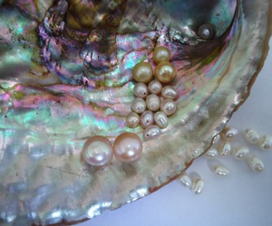 pearls, mermaid, and shell image