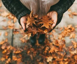 autumn, beautiful, and black image