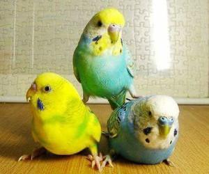 animal, bird, and parakeet image