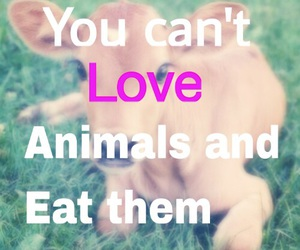 animals, eat, and meat image