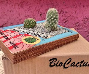 cactus, cool, and diy image