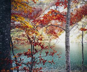 beautiful, autumn, and tree image