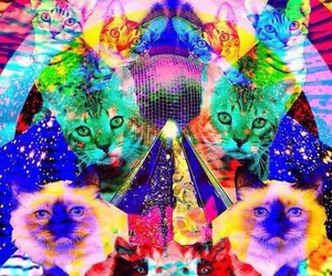cat, psychedelic, and drugs image
