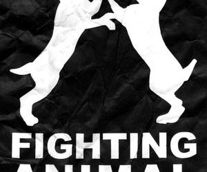 animal, animal testing, and lush image