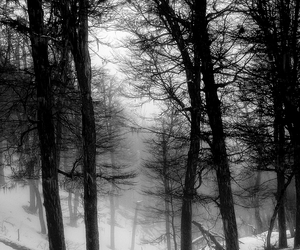 snow, dark, and forest image