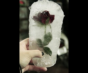 love, flowers, and ice image