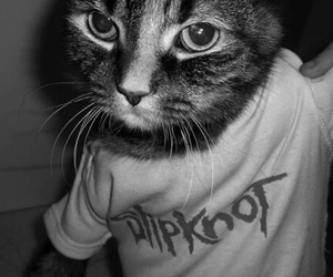 slipknot and cat image