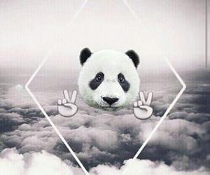 wallpaper, panda, and animal image