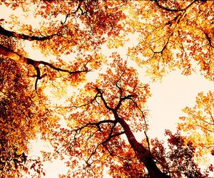 tree, autumn, and leaves image
