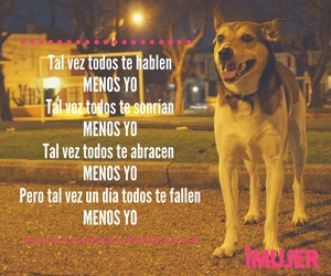 dog, life, and quotes image