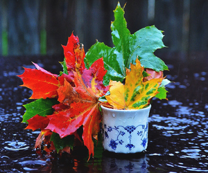 autumn, cup, and leaf image