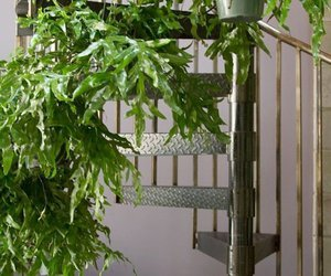 ferns, light, and spiral staircase image