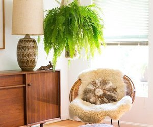 70's, ferns, and light image