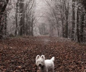 autumn, fall, and westie image