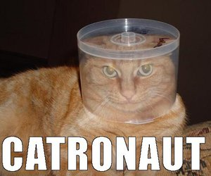 cat and catronaut image