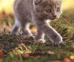 animals, cats, and fall image