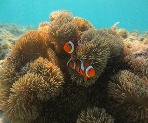 fish, animal, and nemo image