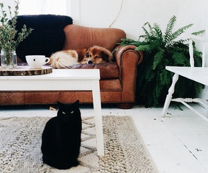 cat, dog, and home image