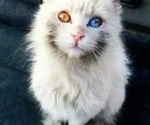 cat, eye, and white image
