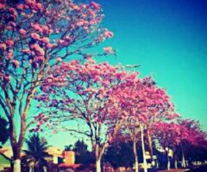 trees and pink image