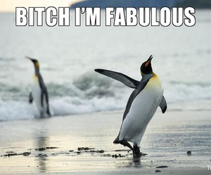animals, funny, and pinguins image
