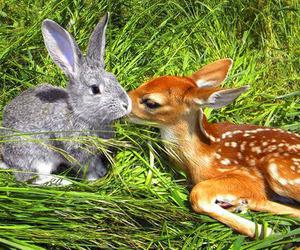 rabbit, animal, and deer image