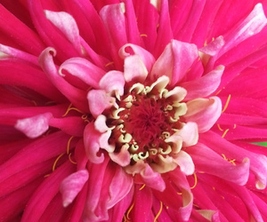 flower, fucsia, and petals image
