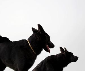 dog, black, and animal image