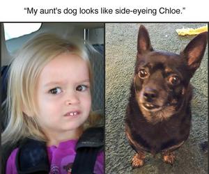 chloe, hilarious, and lmao image