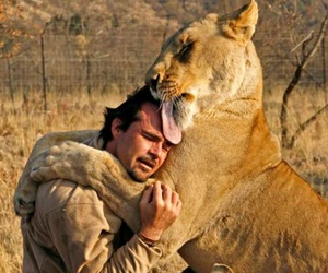 love, animal, and lion image
