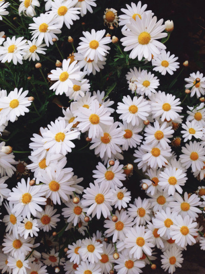 daisy, vintage, and flowers image