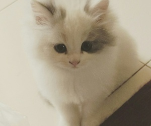 fluffy, furry, and kitty image