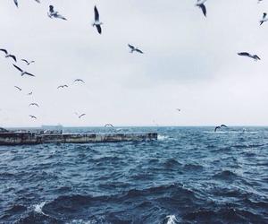 sea, bird, and blue image